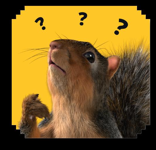 squirrel question