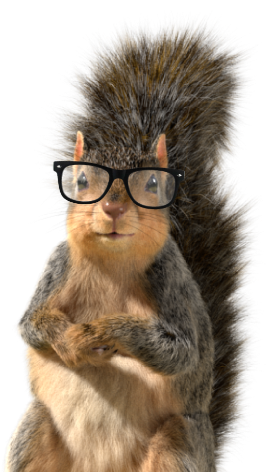 Squirrel with glasses