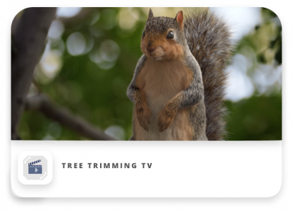 Tree Trimming TV